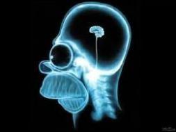 Quel est le problème anatomique du cerveau d'Homer ?