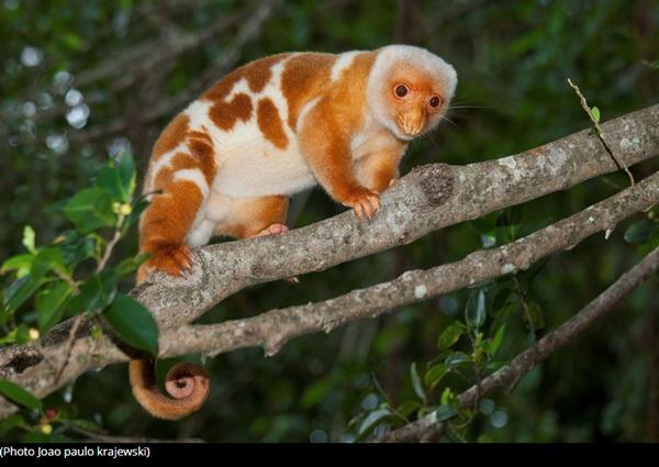 De quel animal s'agit-il ?