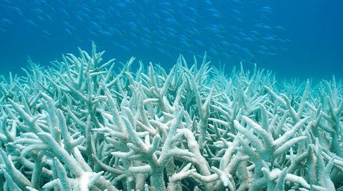 Where is the Great Barrier Reef ?