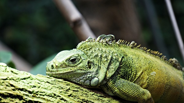 L'hiver, certains animaux entrent en hibernation. À l'opposé, en été, d'autres ont trop chaud et déclenchent :