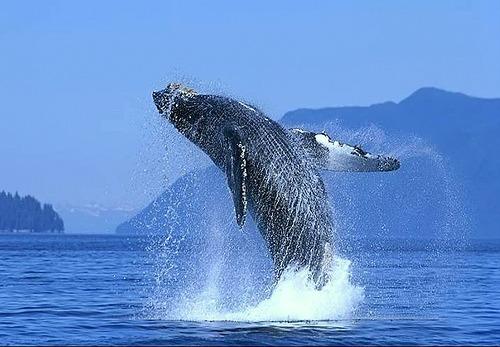 ¿Cómo se llama la zona natural marítima en la cual se puede ver las ballenas?