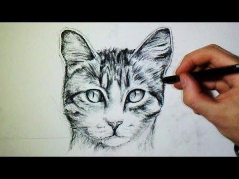 """[Belgique] Si votre mère vous dit d'arrêter de """"faire le chat"""", cela signifie que vous devez cesser de..."""