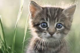 A quelle famille les chats appartiennent-ils ?