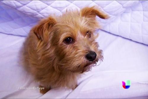 ¿Como se llama el nuevo perro de la tropa Lascurain?