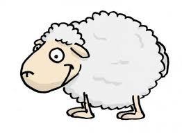Pourquoi les moutons sont-ils tondus ?