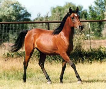 Lequel est une partie du corps du cheval ?