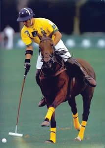 Quando surgiu o esporte Polo ?