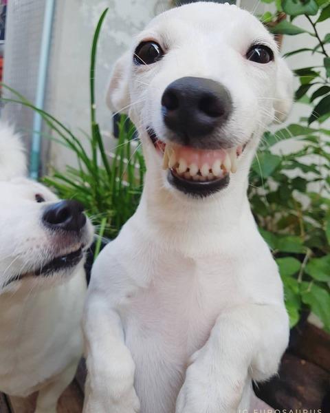 """Barzelletta da completare: La maestra dice a un alunno: """"Il tuo tema intitolato 'Il mio cane' è uguale a quello di tuo fratello, l'hai copiato?"""" E lui: """"No maestra, è che abbiamo lo ..............cane!"""""""