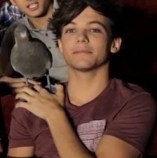 Quel est le nom du pigeon de Louis ?