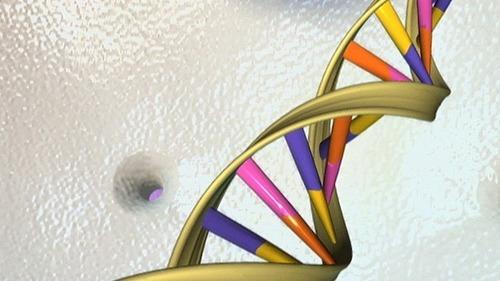 Par quel terme désigne-t-on l'ensemble des mécanismes de régulation et de décryptage de notre patrimoine génétique ?