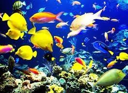 O coletivo de peixes é ...
