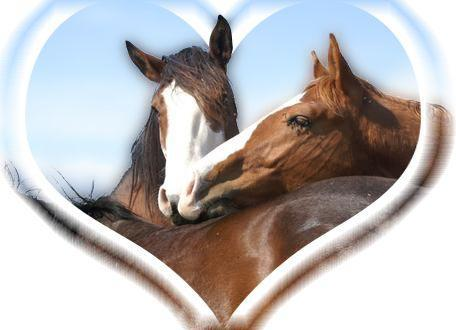 Les chevaux quiz nature animaux - Chevaux gratuits ...